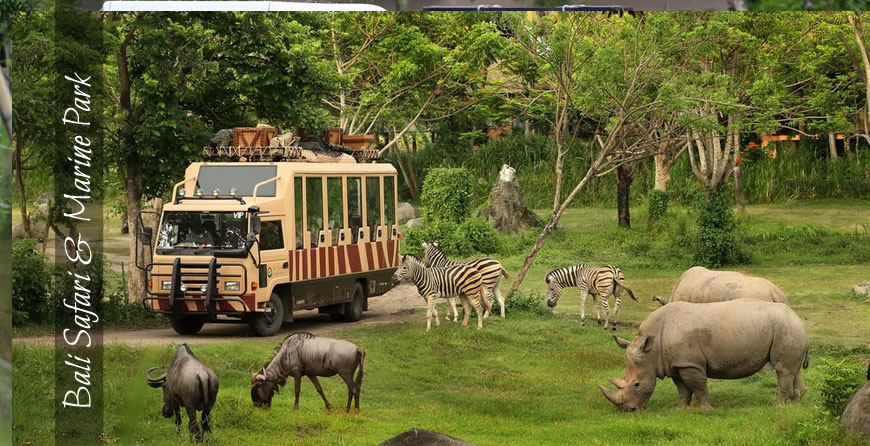 Bali Tour - Bali Safari And Marine Park Tours, Wild Animal Park, Bali